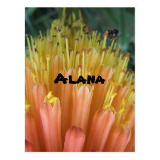 Alana Postcard