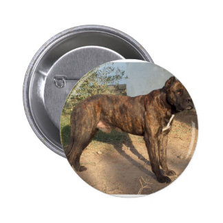 Alano Español Dog Button