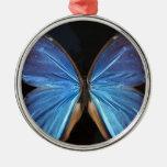 Alas azules iridiscentes de la mariposa ornamento de reyes magos