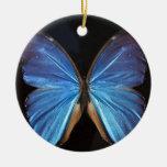 Alas azules iridiscentes de la mariposa ornato