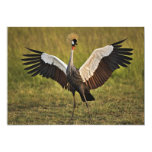 Alas de extensión del pájaro invitación 12,7 x 17,8 cm