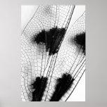 Alas de la libélula posters