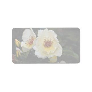 Alas de oro preciosas del rosa de arbusto ' etiqueta de dirección