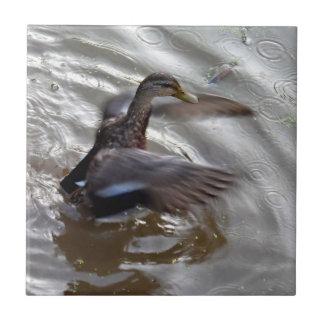 Alas del aleteo del pato del pato silvestre azulejo ceramica