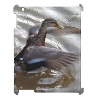Alas del aleteo del pato del pato silvestre