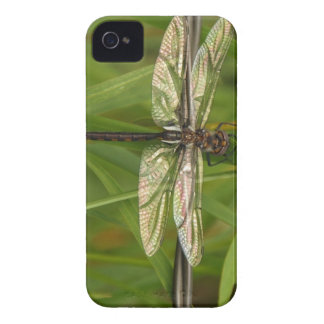 Alas del caso del iPhone 4 de la libélula del Carcasa Para iPhone 4