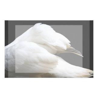 alas del cisne contra imagen oscura del animal del papelería