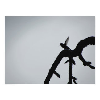 Alas del colibrí cojinete