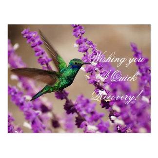 Alas del colibrí de los Violeta-oídos el chispear  Tarjeta Postal
