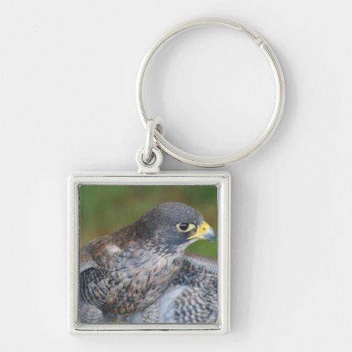 Alas del halcón llaveros personalizados