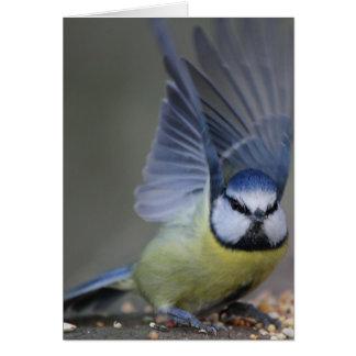 Alas hermosas del pájaro del tit azul tarjeta