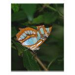 Alas perfectas de la mariposa de Camoflage Plantillas De Membrete