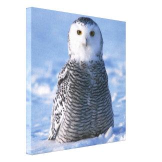 Alaska Arctic Snowy Owl Photo Designed Canvas Print