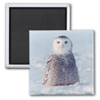 Alaska Arctic Snowy Owl Winter Scene Magnet