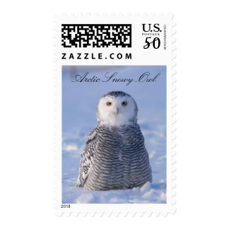 Alaska Arctic Snowy Owl Winter Scene Photo Design Postage