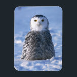 "Alaska Arctic Winter Snowy Owl Designed Magnet<br><div class=""desc"">Exceptional photo designed refrigerator magnet for those whom love &quot;Owls&quot;, this adorable snowy owl from the arctic will add class to your collection or use for gifts anytime of the year. No need to waste money on stick notes when these magnets will hold all your special reminders whether it be...</div>"