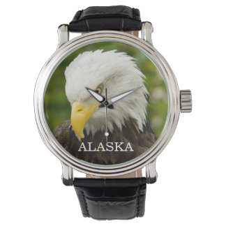 Alaska Bald Eagle Watch