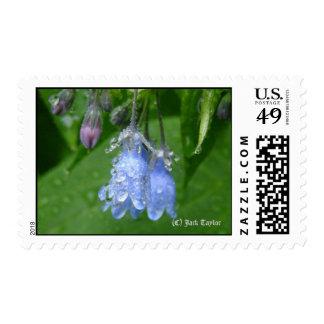 Alaska Bluebell 05 Postage Stamp