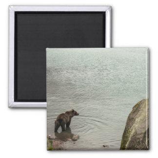 Alaska Brown Bear (Grizzly) Lake 2 Inch Square Magnet
