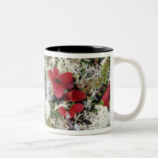 Alaska, Denali National Park, Arctic tundra is Two-Tone Coffee Mug