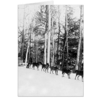 Alaska Dog Sledding Card