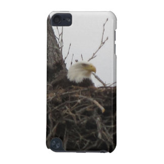 Alaska Eagles