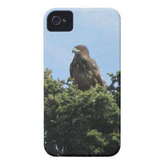 Alaska Eagles Case-Mate iPhone 4 Cases