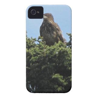 Alaska Eagles Case-Mate iPhone 4 Carcasa