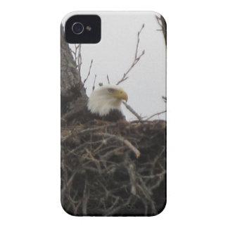 Alaska Eagles Case-Mate iPhone 4 Cobertura