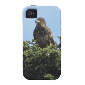 Alaska Eagles iPhone 4/4S Carcasas