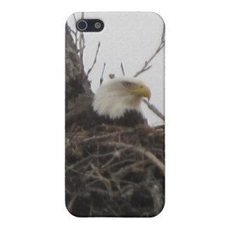 Alaska Eagles iPhone 5 Carcasas
