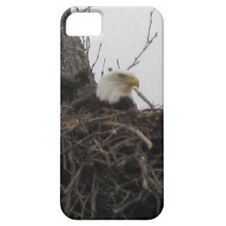 Alaska Eagles iPhone 5 Cobertura