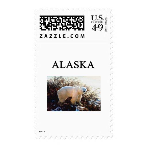 Alaska Envio