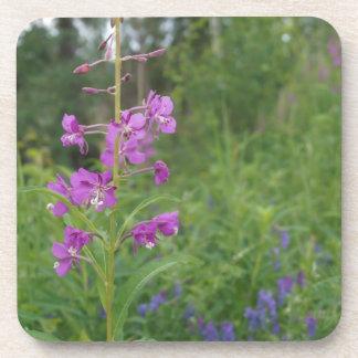 Alaska Fireweed wildflower Drink Coasters