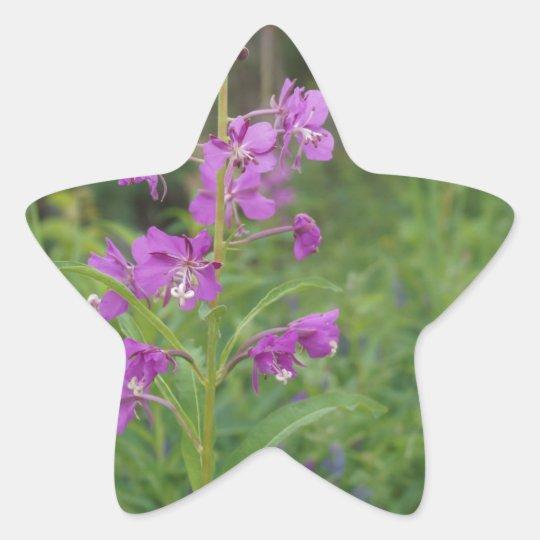 Alaska Fireweed wildflower Star Sticker