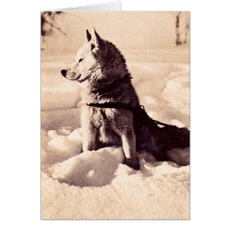 Alaska Iditarod Dog Greeting Card