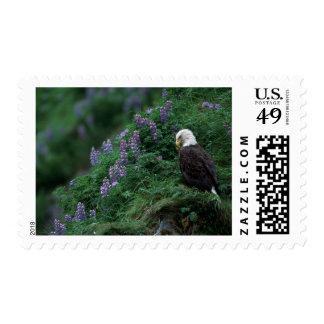 Alaska, isla Eagle calvo de Unalaska entre Nootka Sellos Postales
