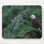Alaska, isla Eagle calvo de Unalaska entre Nootka Alfombrillas De Raton