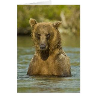 Alaska. Katmai NP. Coastal Brown Bear fishing Card