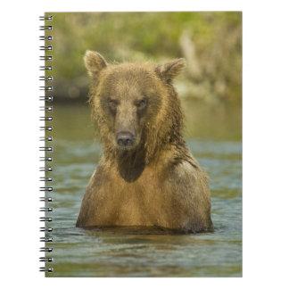 Alaska. Katmai NP. Pesca costera del oso de Brown Spiral Notebooks