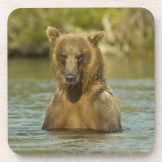 Alaska Katmai NP Pesca costera del oso de Brown Posavasos De Bebidas