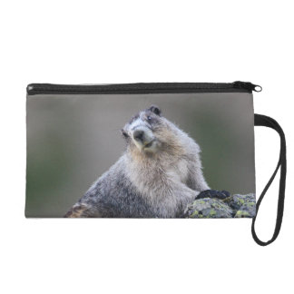 alaska marmot wristlet clutches