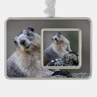 alaska marmot silver plated framed ornament