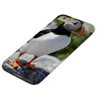 Alaska Puffin Colorful Birds Tough iPhone 6 Plus Case