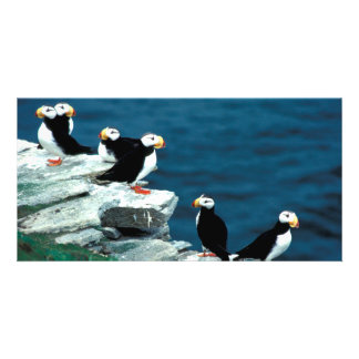 Alaska Puffins Feathered Colorful Birds Card