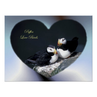Alaska Puffins Feathered Colorful Birds Poster