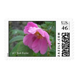 Alaska Rose 01 Postage Stamp