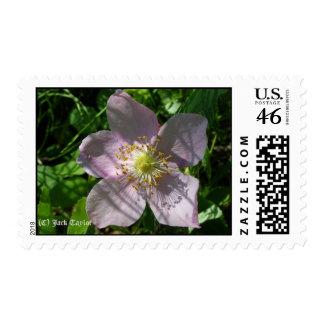 Alaska Rose 03 Stamp