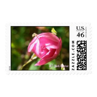 Alaska Rose 05 Stamps