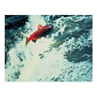 Alaska Salmon Postcard